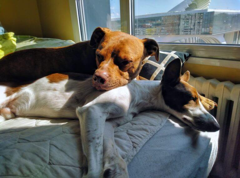 Desi y Miky durmiendo