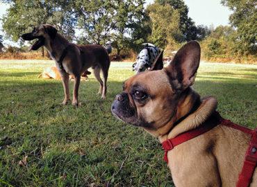 Claves para el buen paseo con tu perro