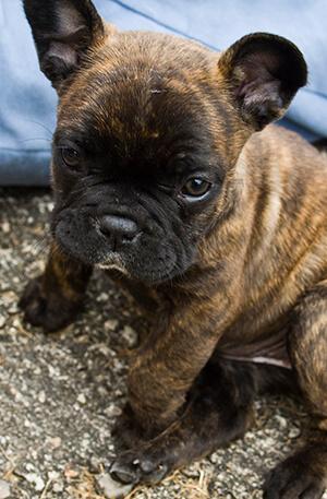 Cuidado de cachorros en Oviedo