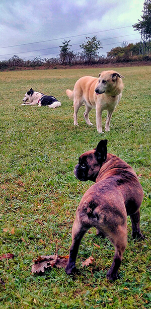 Cuidador de perros en Oviedo