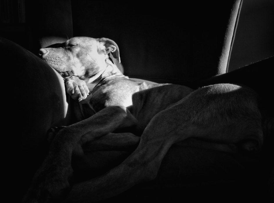 Desi Durmiendo