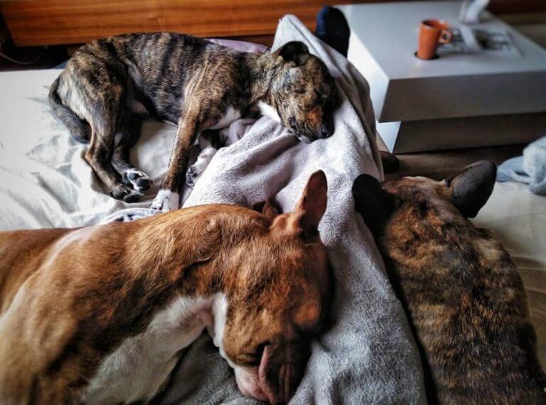 Perros durmiendo juntos
