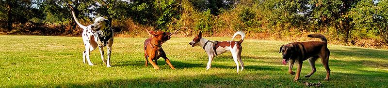 Educación canina en Asturias