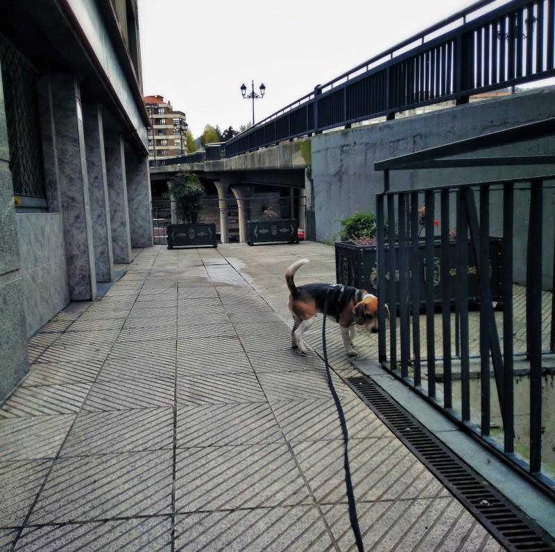 Explorando calle olvidada