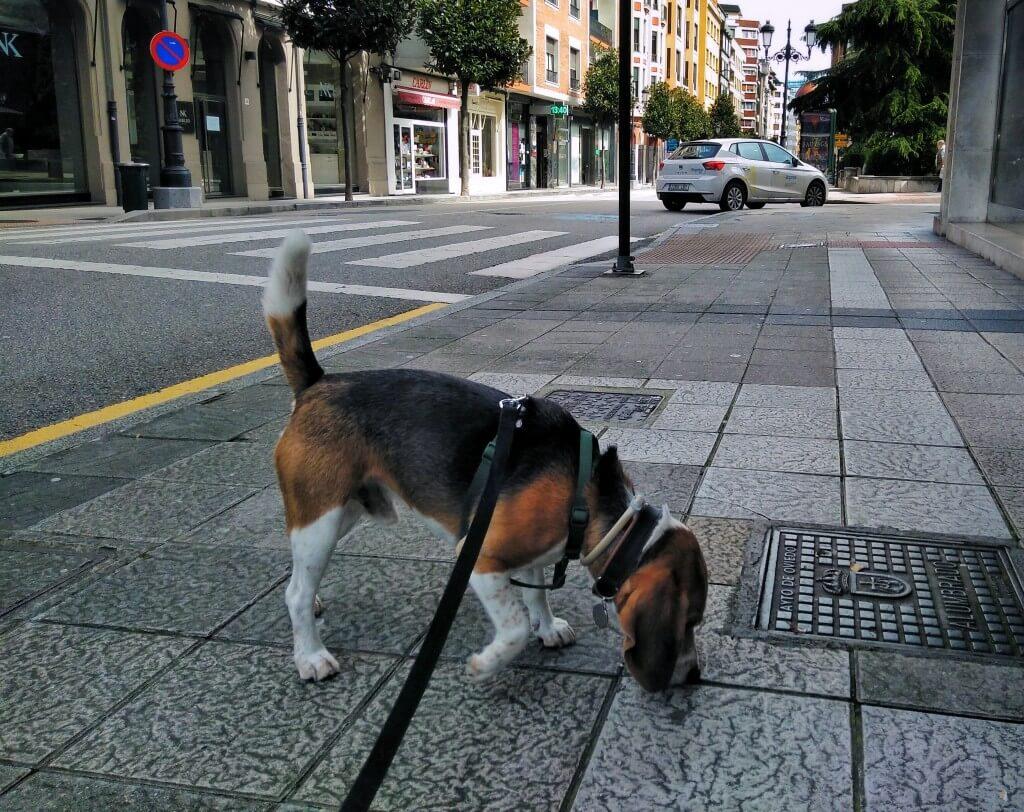 Perro explorando entorno