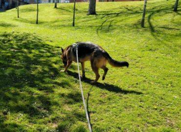 Paseo con correa larga y arnes