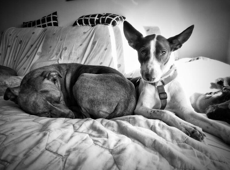 Miky y Desi